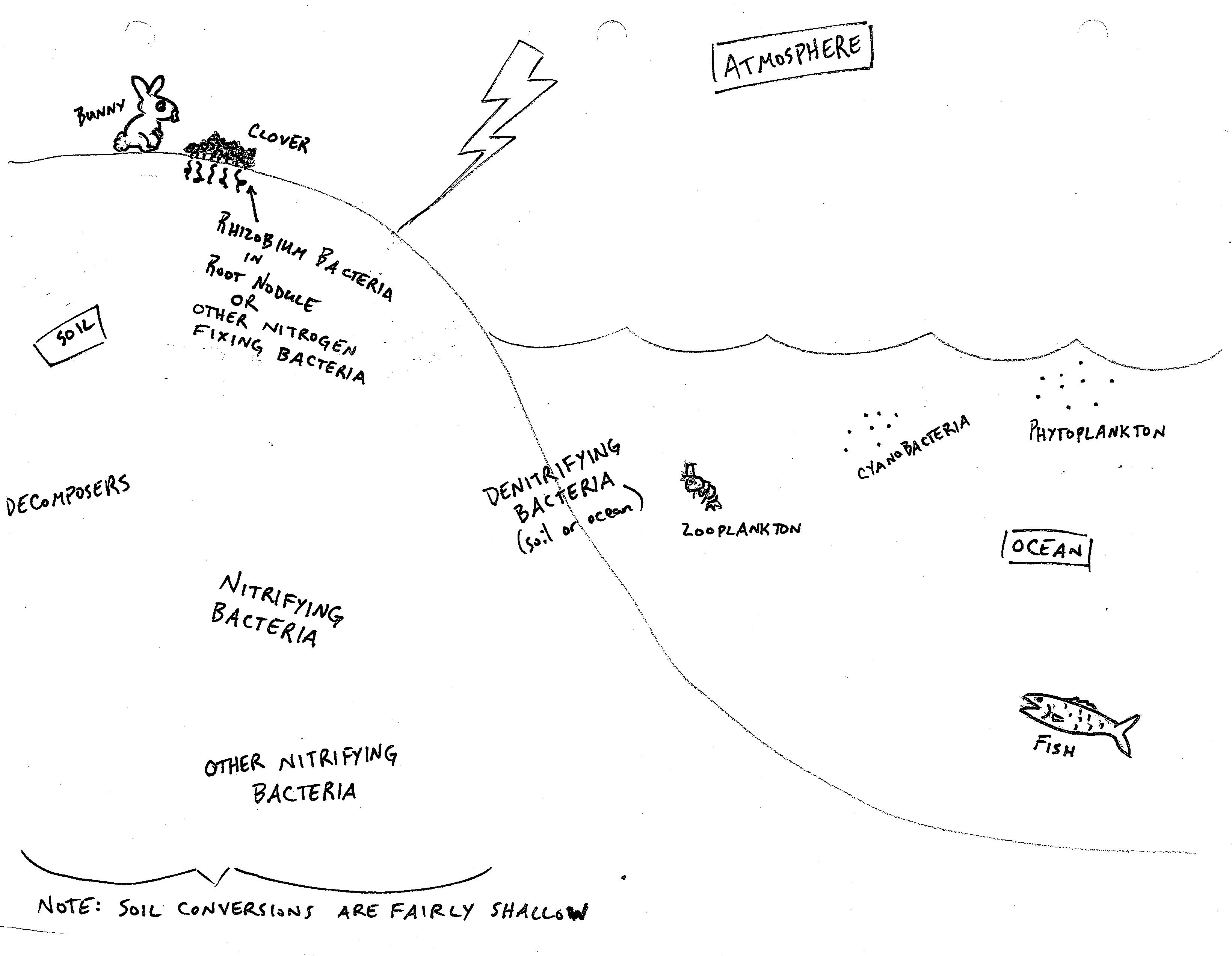 Carbon Cycle Diagram Worksheet | Collis Charles Unit B Fundamentals Of Ecology